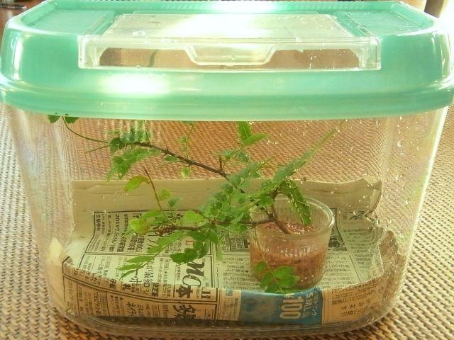 春の野に出でて、若菜摘む・・・いや、チョウの幼虫も見つけよう!