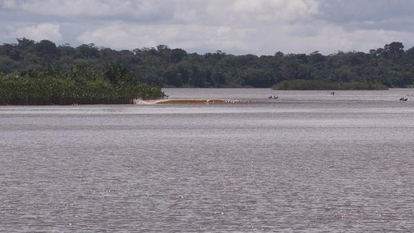 未来世紀、ホボブラジル 第2回 (松林要樹)