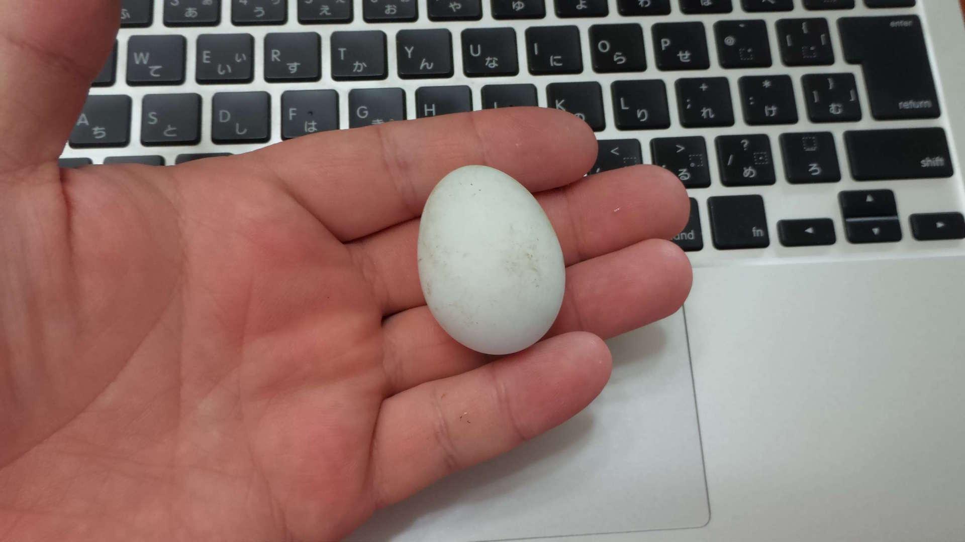 鷹卵を食す!