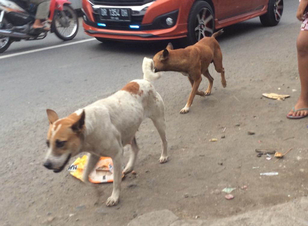 ロンボクだより(5):ロンボクの犬と夫の涙(岡本みどり)
