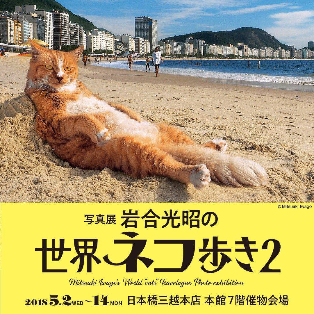 世界ネコ歩き 岩合光昭。その他、写真展のご案内