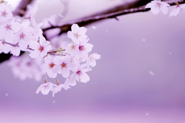 春だから感じる哀愁、「春愁」という言葉があるそうです