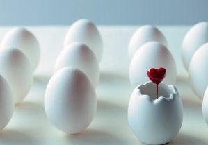 新常識だ!脂は食べろ・・・卵は一日3個以上食べたほうがいい。 ついにコレステロールの常識が覆った!