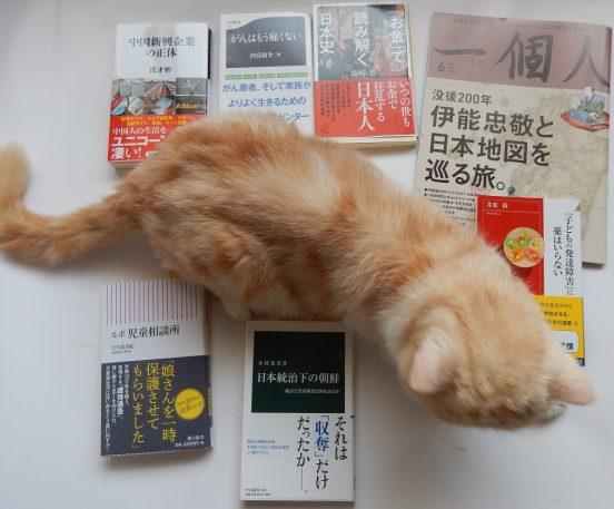 猫、乱入、それでも負けない読書中!!