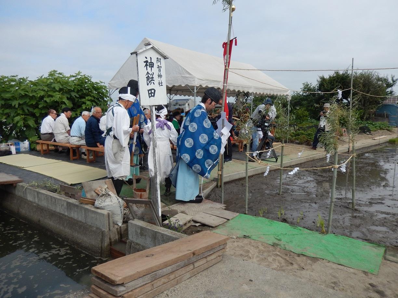 今月の倉敷美観地区、「御田植祭」ですよ!