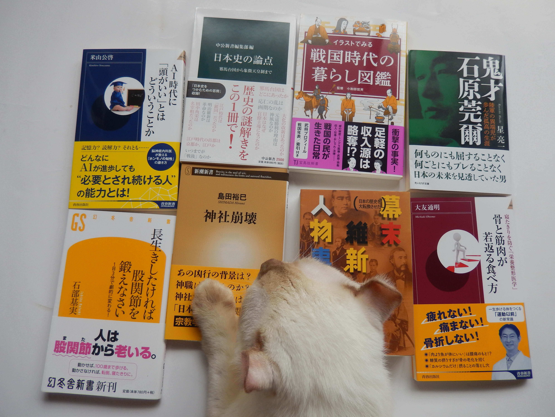 猫、乱入、今月の読書中!