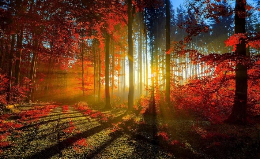 twitter で秋の写真を探してみました~