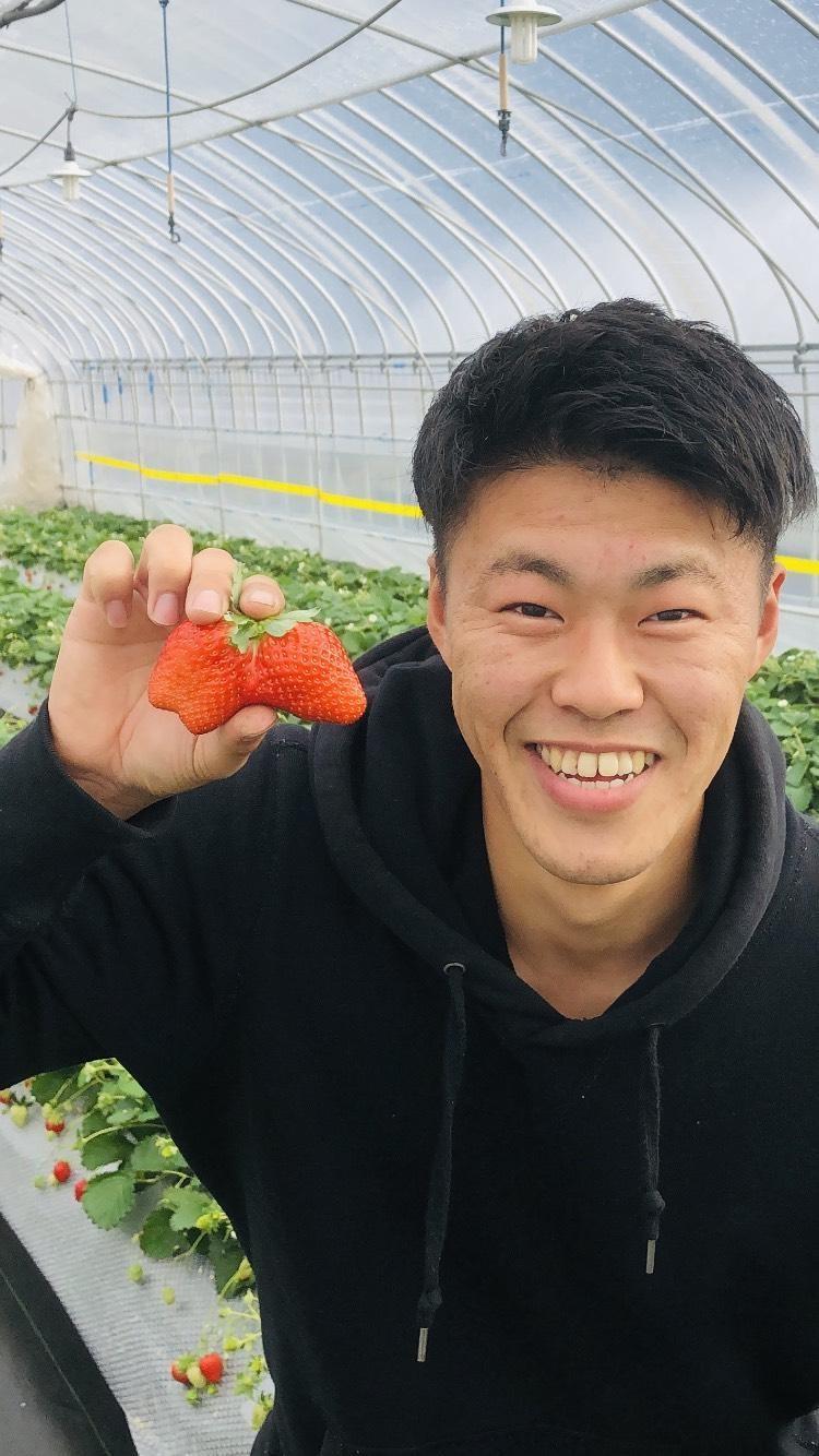 インドネシアで美味しいイチゴを作りたい! ~元現採・たくいさんの挑戦~(大島空良)