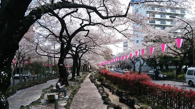 文京区内のお花見スポットを一挙紹介!