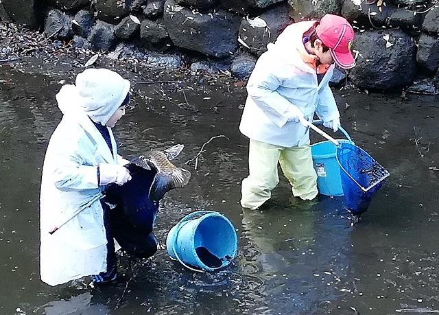 歴史ある占春園の池をきれいに/親子参加のかいぼりイベントで再生