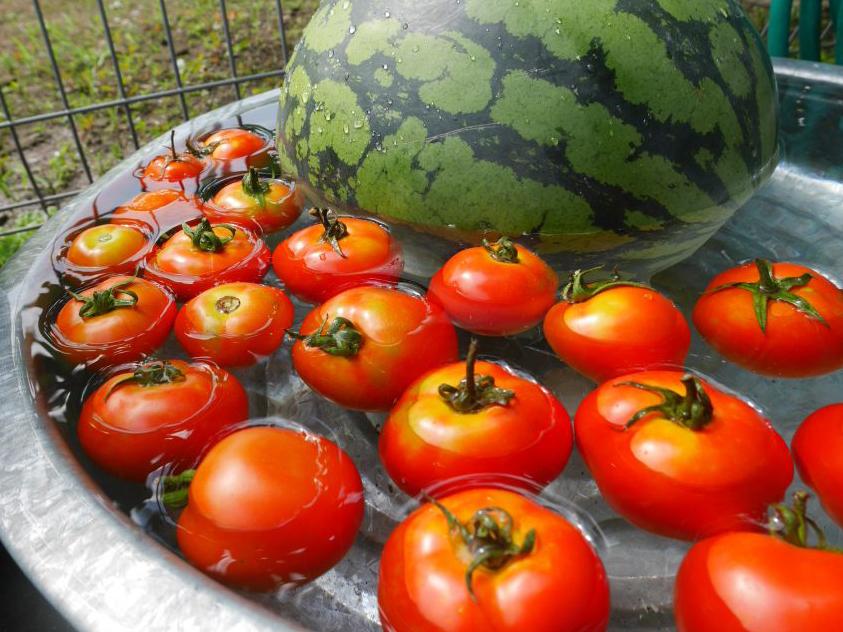 スイカとトマトの思い出