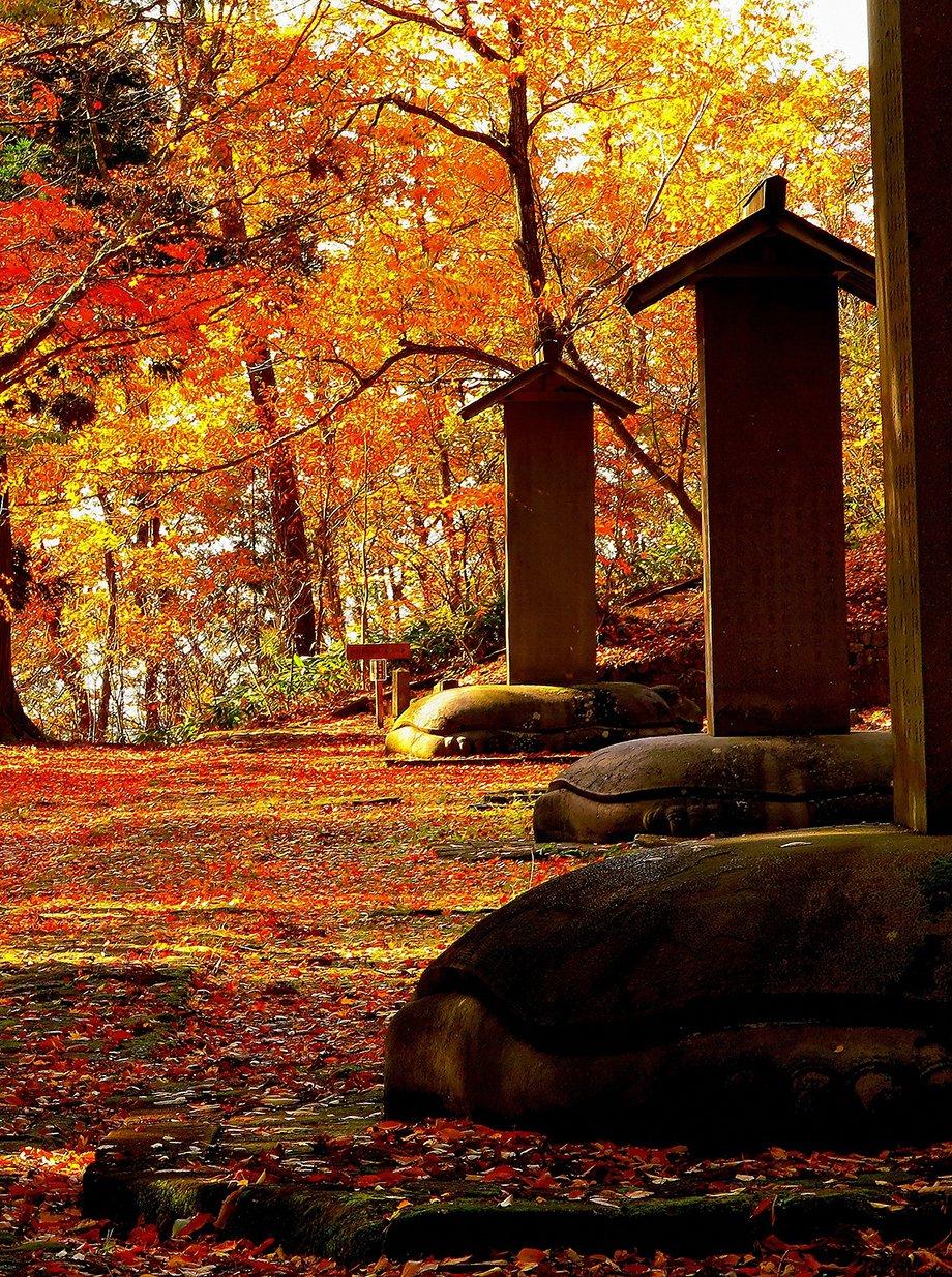 ふ~けゆく~秋の夜~会津の紅葉