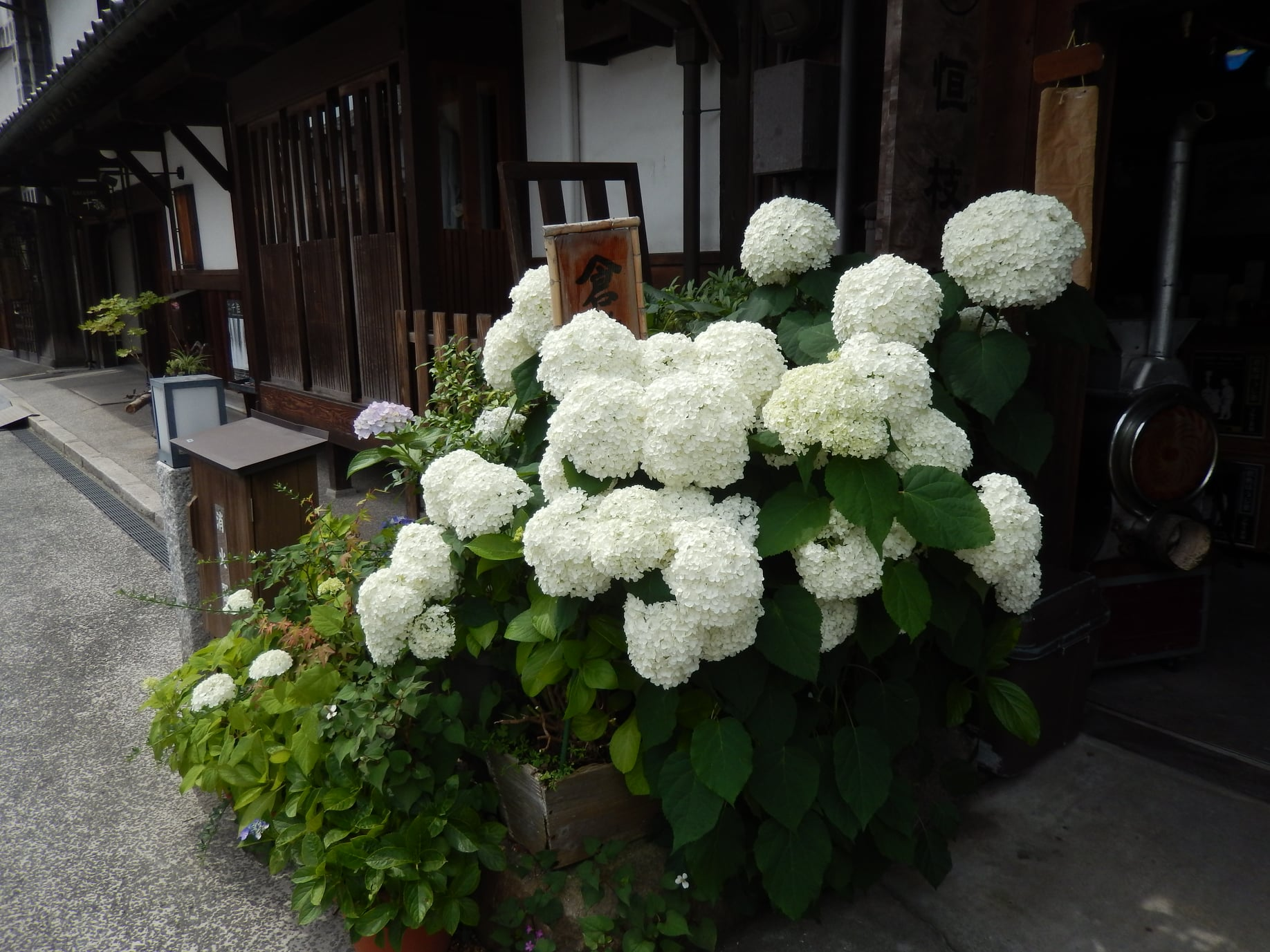 7月の倉敷美観地区散歩