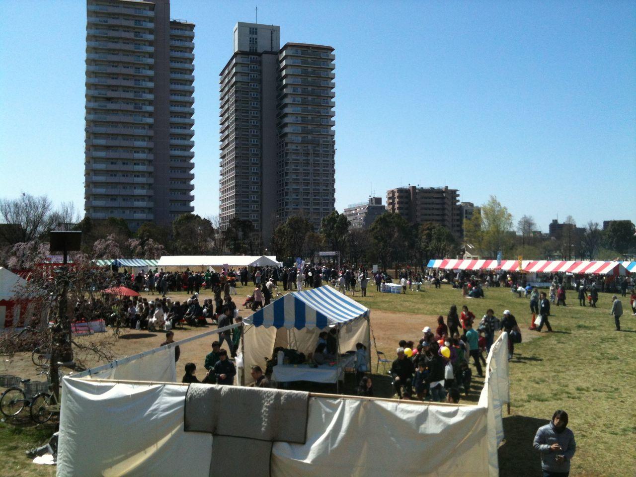 荒川区イベント紹介:尾久の原公園シダレザクラ祭り