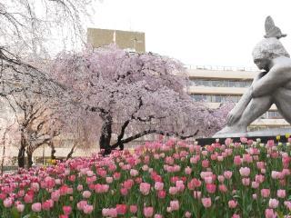 地域紹介特別編:荒川区でゆっくり優雅にお花見!完全版お花見マップ付き。