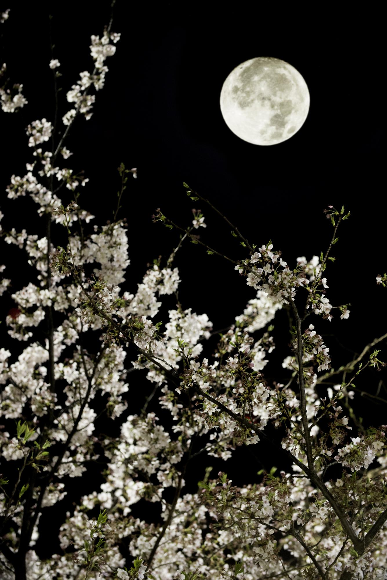荒川区の夜を遊ぶ 第3回 大切な人と夜桜をたのしむ