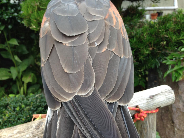 鳥屋時期の管理