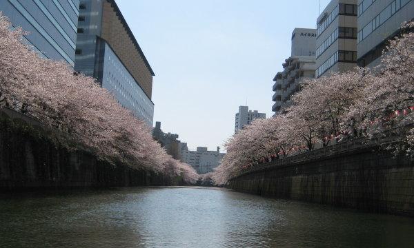 春と言えばお花見 今年も開催「さくらクルーズ」!