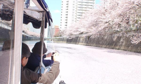 東京の川で遭遇する巨大花筏(はないかだ)!
