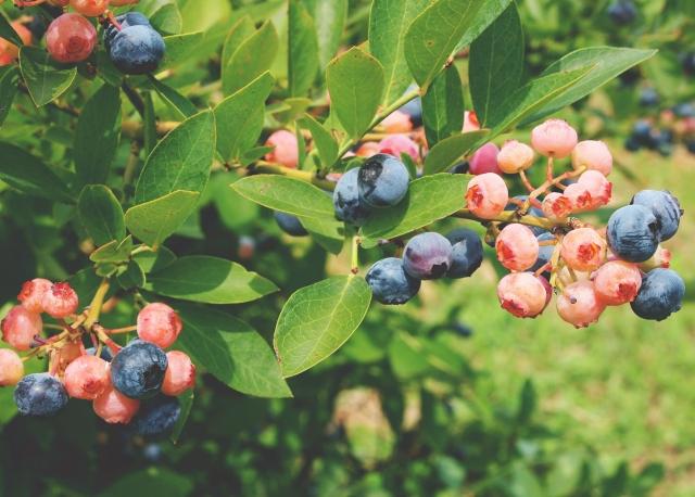 健康食品やサプリメントの情報を吟味する