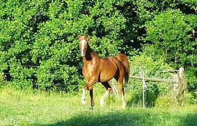 馬の品種その3