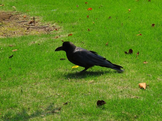 愛される鳥「トキ」と愛されない鳥「カラス」のちがい 当事者企画