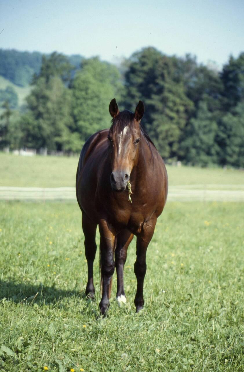 馬の品種 その5
