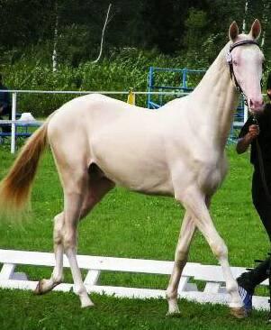 馬の品種 その4