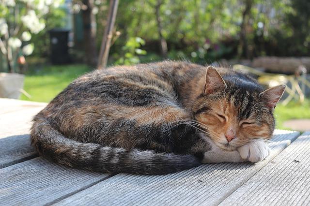 非薬物療法 第16回 睡眠時無呼吸症候群の治療をすると良いことがありますか?