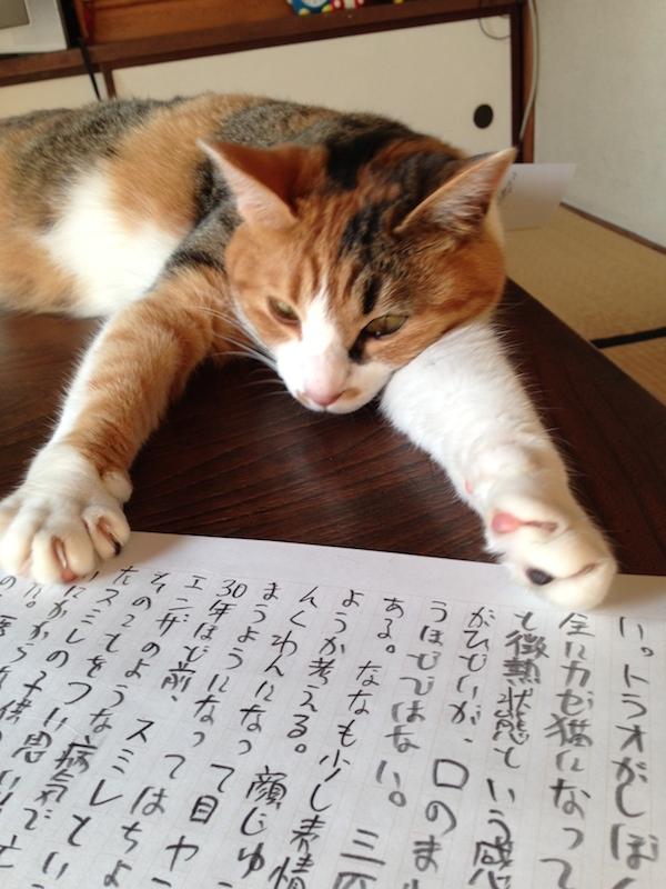 ねこ日記 第5回 (湯浅学)