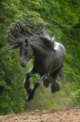 馬の品種その6