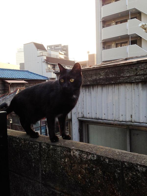 ねこ日記 第2回 (湯浅学)