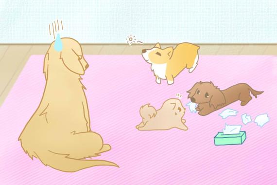 人も犬も重要な社会化って?