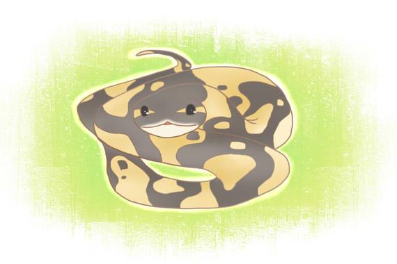 ペットで飼えるニシキヘビ