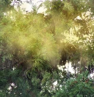 インバウンド体験記「訪日外国人との対応 」~乾燥時期に多い相談例と花粉症相談