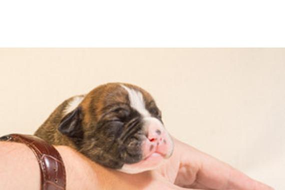 令和元年ペット関連企業の株主総会~日本動物高度医療センター