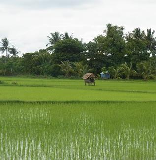 インドネシア米農業の現状を概観する(松井和久)