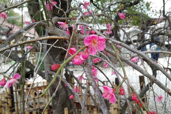 梅の香ただよう春