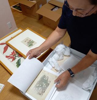 植物が結んだ版画家と植物分類学者の交流/文京区民の子孫が遺品提供「企画展 樺太の植物と風景-船崎光治郎と牧野富太郎」