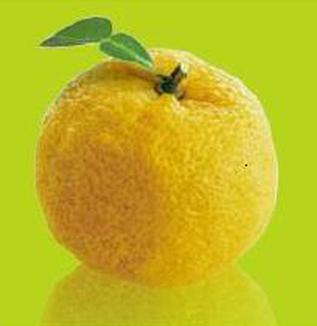 マダムゆずが語る『柚子物語』その5