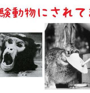 日本って世界の人体実験場なの? 電子タバコはアメリカでは発売されていない、日本人で動物実験してから~だとさ?     WEBライター募集中(セカンドインカムへの挑戦者来たれ!)