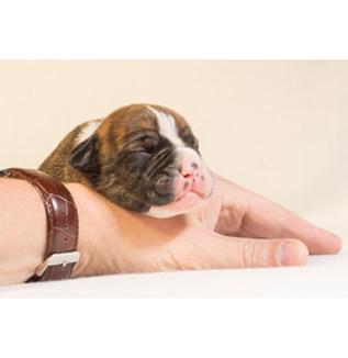 動物福祉に配慮した飼養管理について