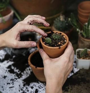 非薬物療法 第20回:園芸は認知症予防に役に立ちますか?
