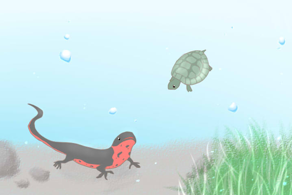 身近なイモリと水ガメ