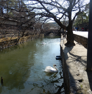 3月の倉敷美観地区散歩!
