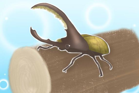 昆虫王者!ヘラクレスオオカブト!?