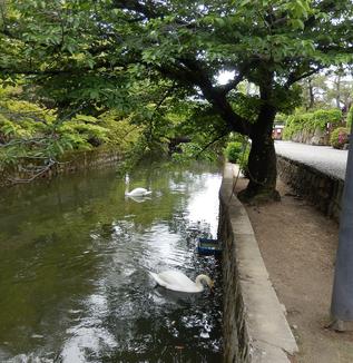 今月の倉敷美観地区散歩!