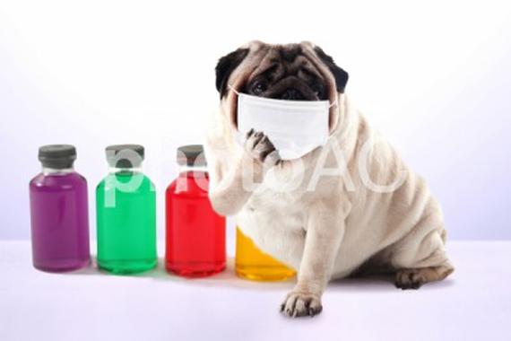 ペット関連企業のコロナバイルス感染症に対する取り組み